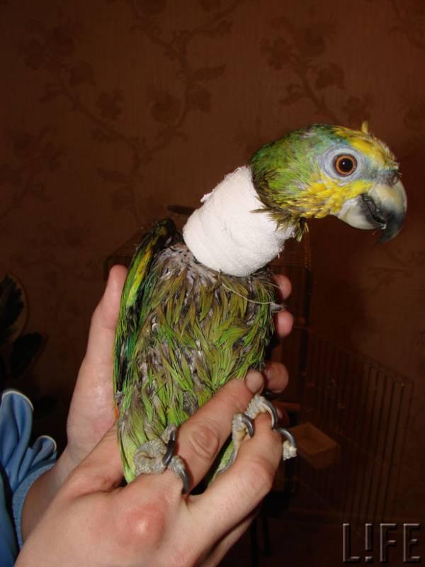 как трахать у попугая - 9